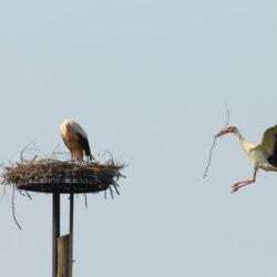 Tippek a madárbarát kertért