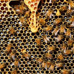 A kemény hidegek megviselik a méheket